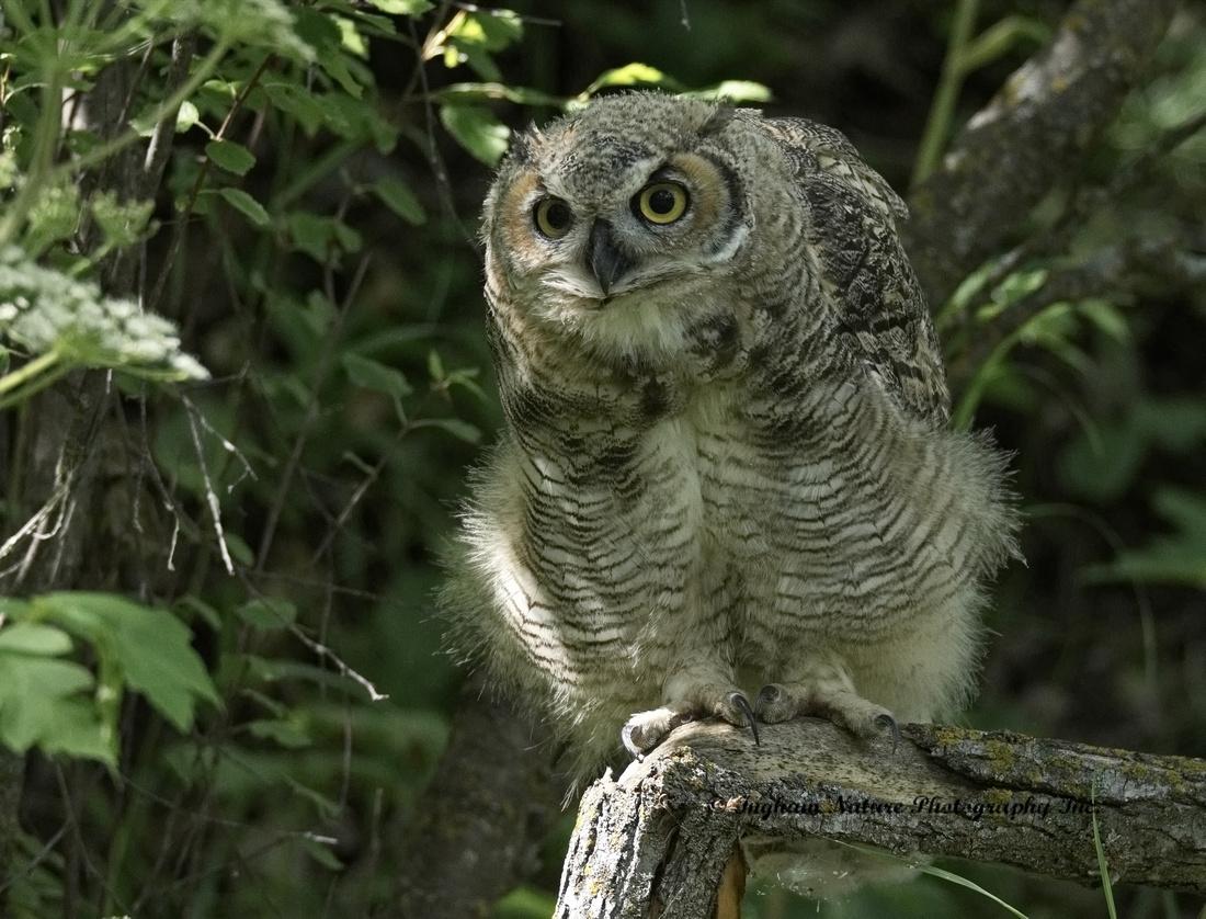 Photo 1 Owl Portrait Studio