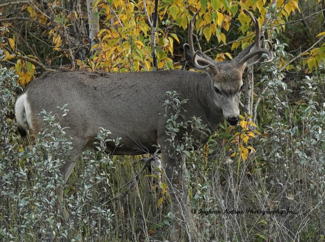 Ingham Nature Photography Inc Blog