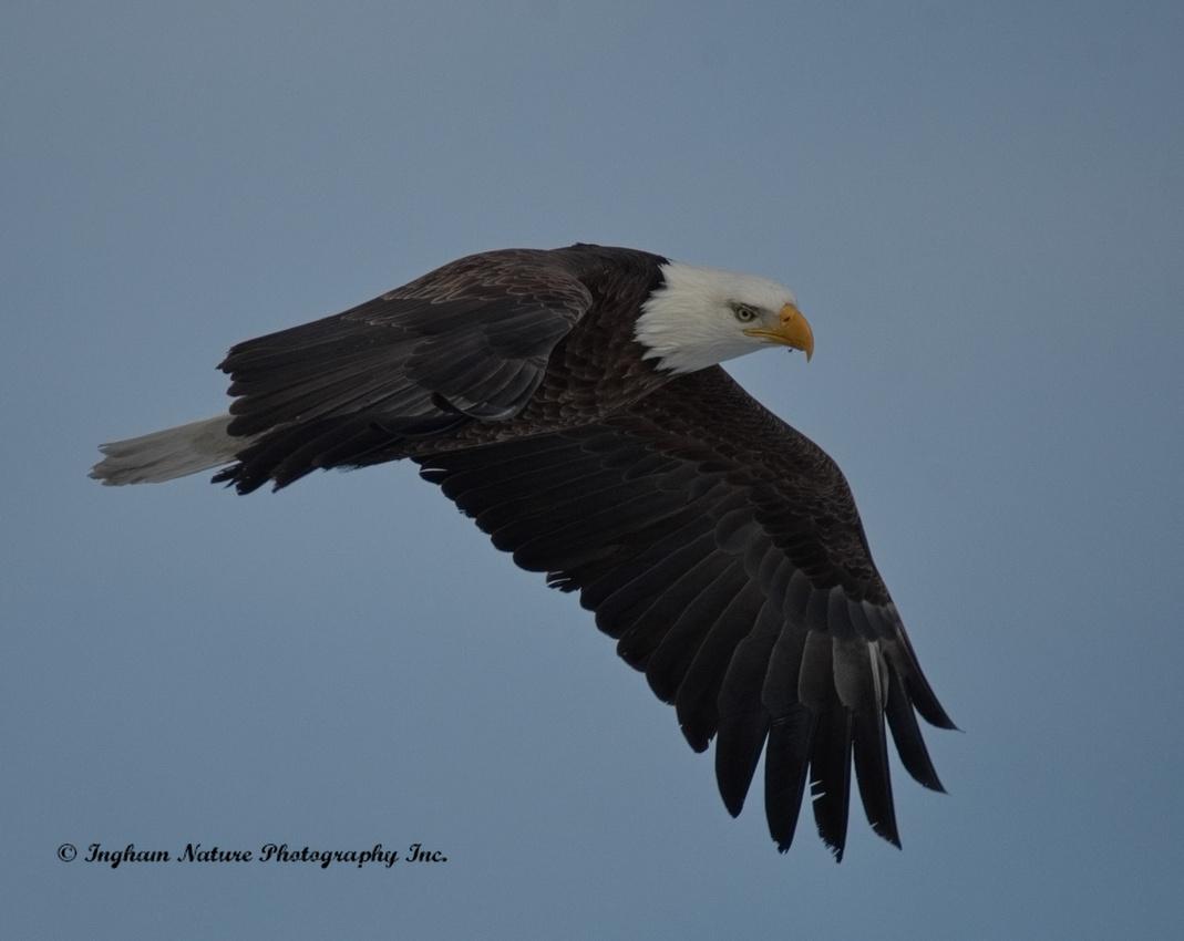 Ingham Nature Photography Inc.: Blog
